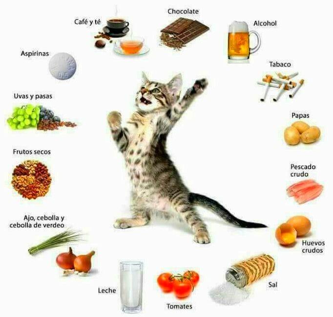 alimentos no deben comer gatos