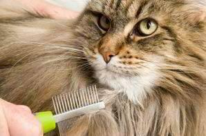 cepillo gato