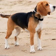 educar perro cachorro