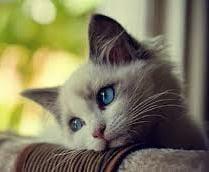 enfermedades gato