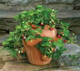 plantar fresas en maceta