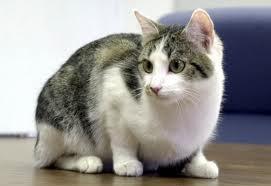 cuidados de los gatos