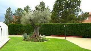 setos jardines