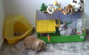 jaula conejos enanos