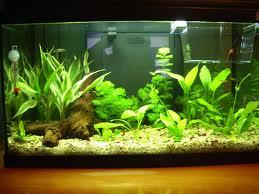 como limpiar acuario