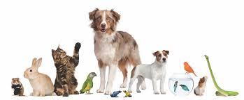 mascotas animales domesticos