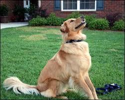 enseñar trucos al perro