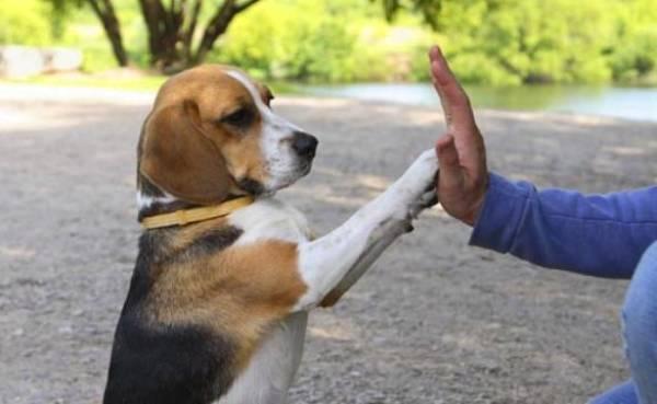 enseñar trucos perro