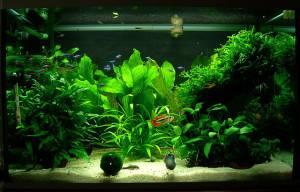 plantas-acuario-naturales