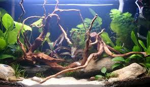 troncos-acuarios