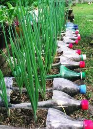 plantar en botellas