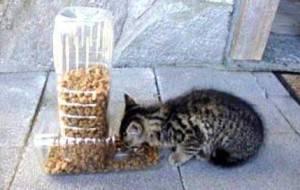 comedero gatos casero