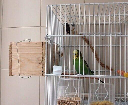 jaula periquito con nido
