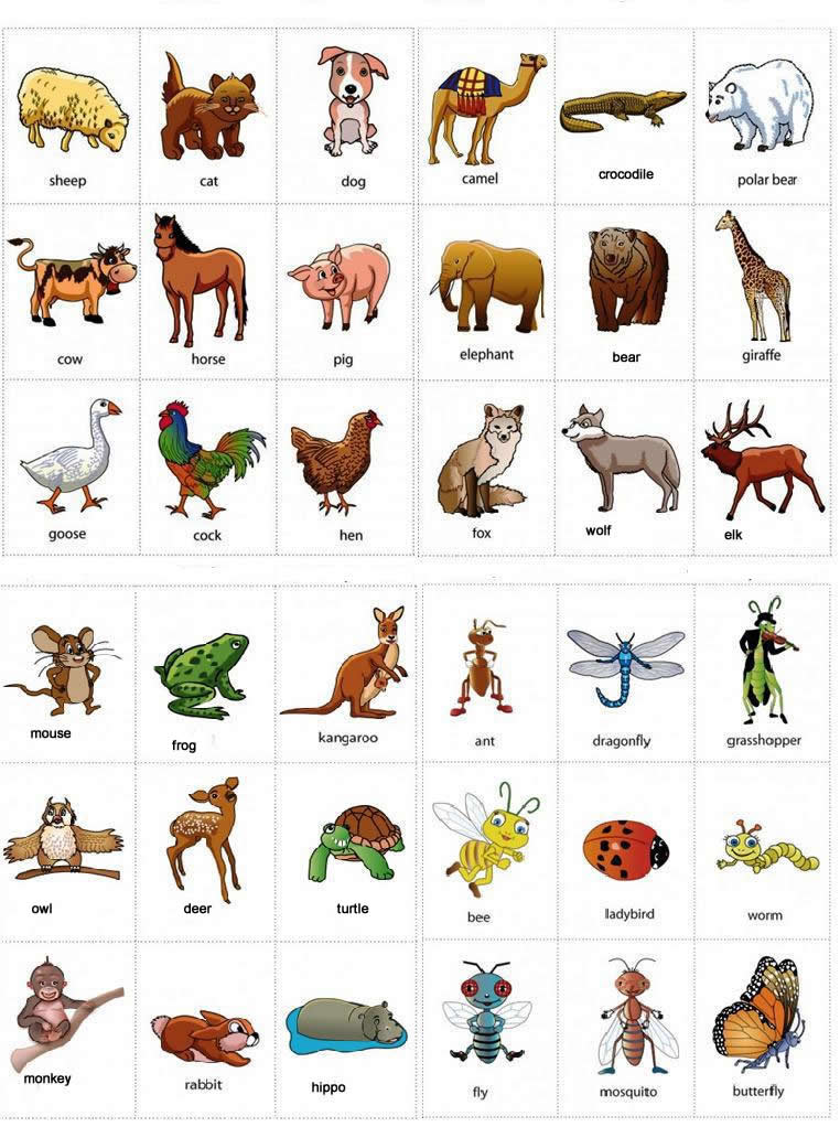 Lista de animales en ingles for Animals with the letter o in their name