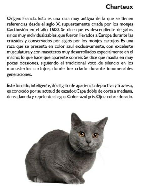 gato-charteux