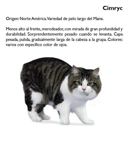 gato-cimryc