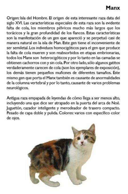 gato-manx