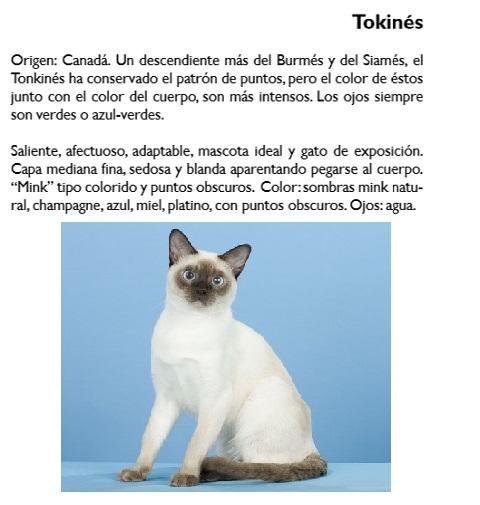gato-tokines
