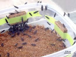 carton-mosca2