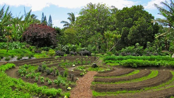 libros gratis huerta organica permacultura